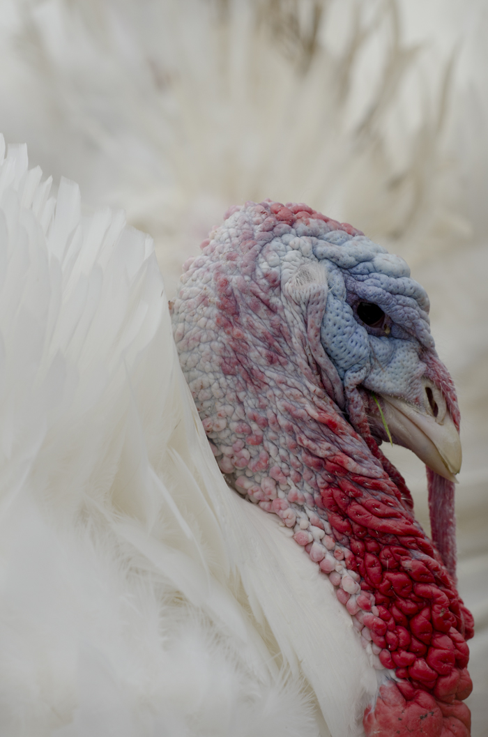 WhiteTurkey