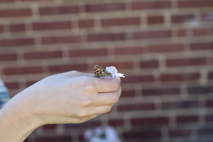 butteryflyflower